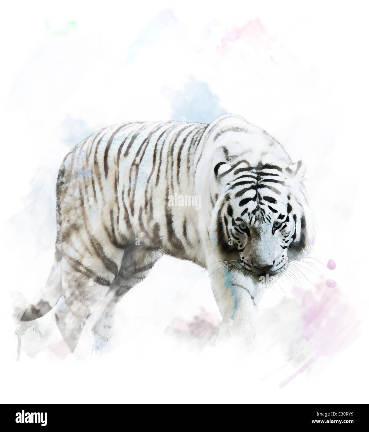Aquarelle peinture digitale de tigre blanc Portrait Photo Stock