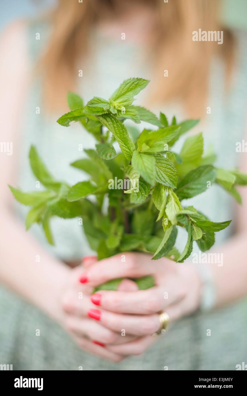 Femme tenant un bouquet de menthe fraîchement cueillis. Photo Stock