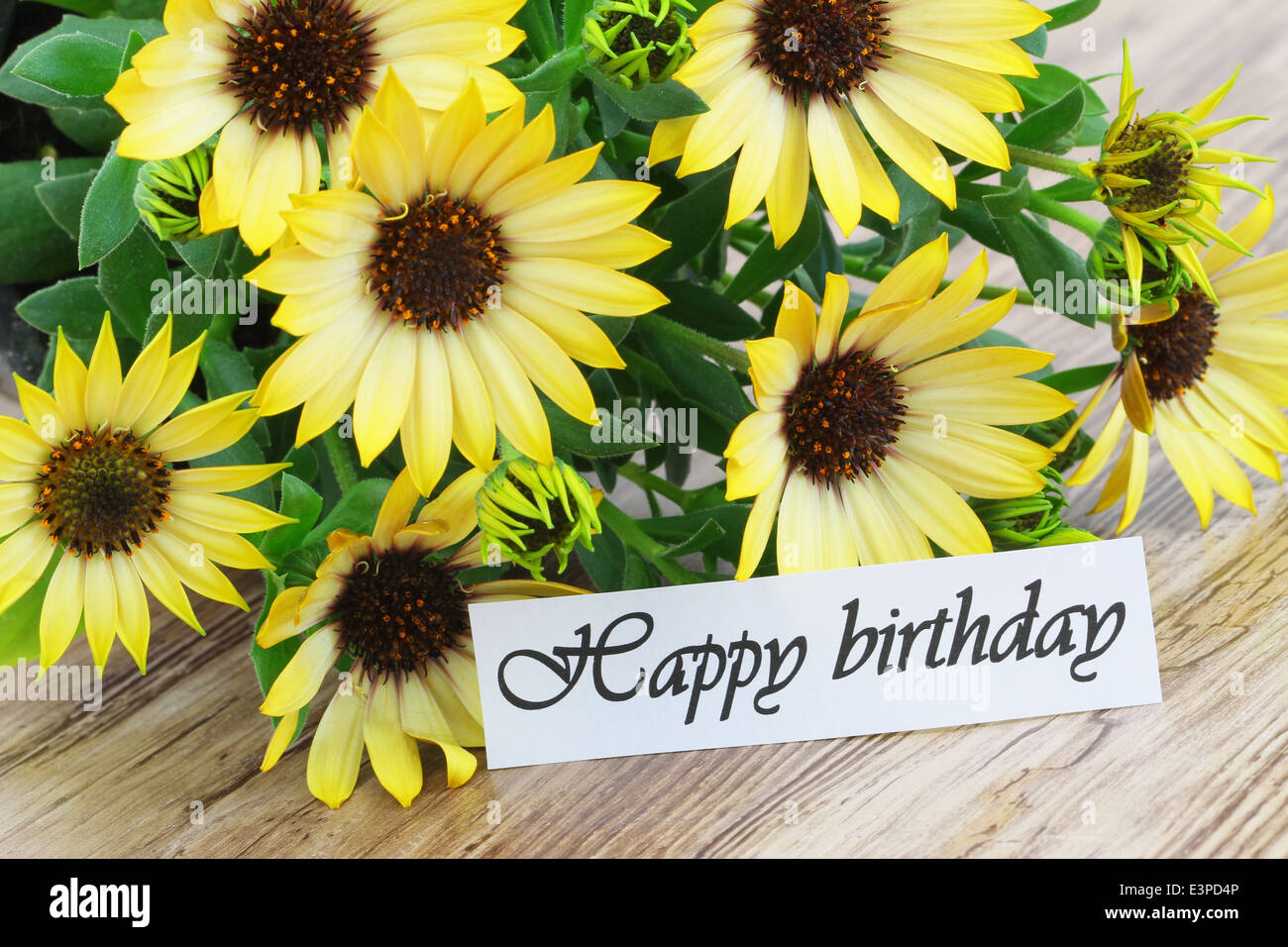 Happy Birthday Card Yellow Daisies Photos Happy Birthday Card