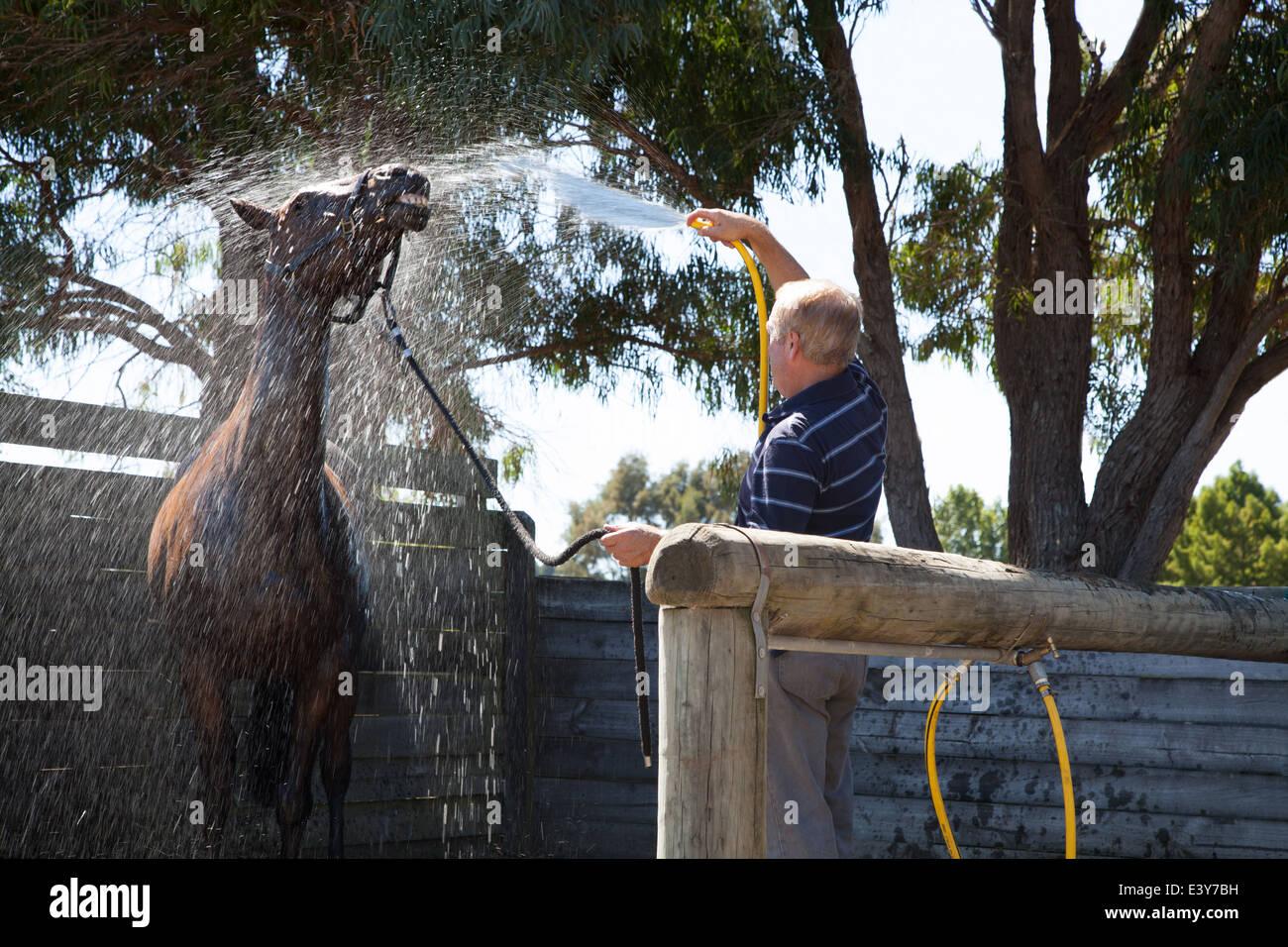 Homme mûr à l'aide du cheval de lavage Photo Stock