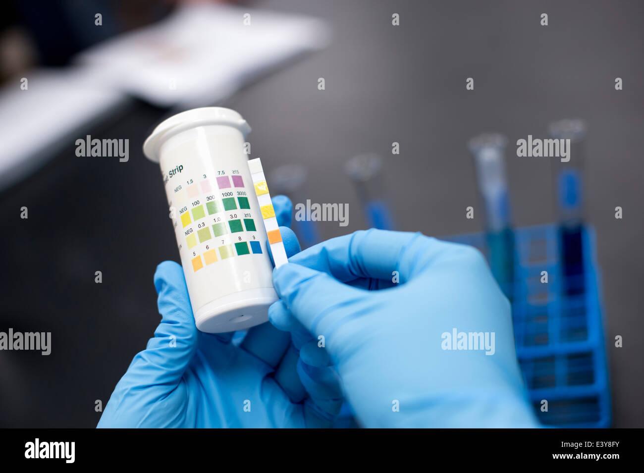 Scientist doing test décisif Photo Stock