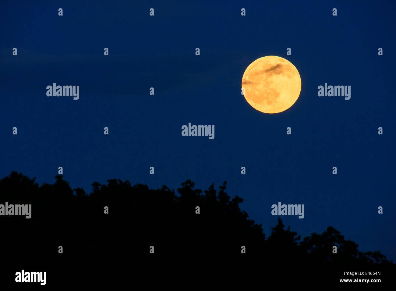 cheap for sale official shop uk store La pleine lune au-dessus d'une forêt dans un ciel de nuit ...