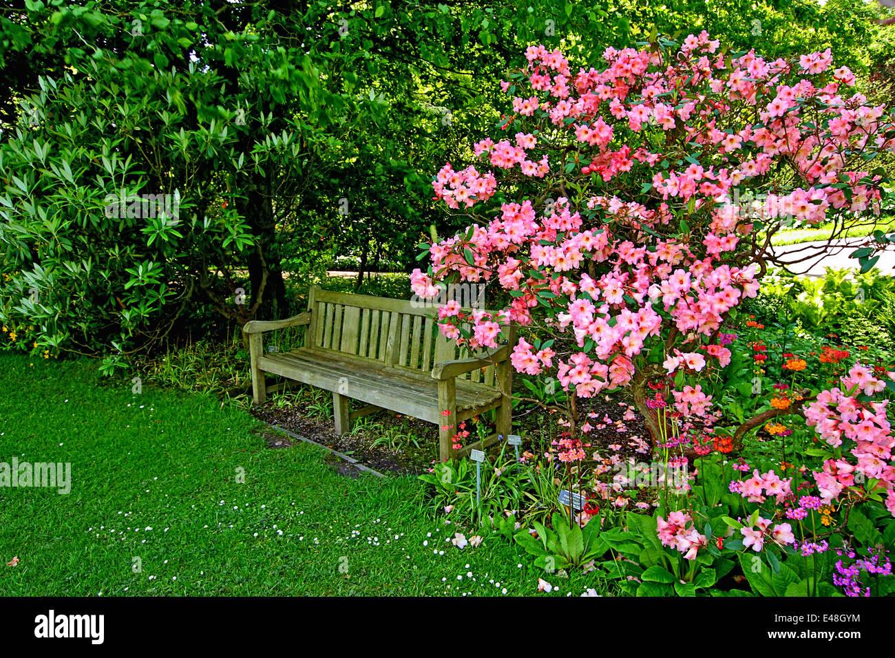 Vieux Banc De Jardin vieux banc en bois, de fleurs de rhododendron dans le vieux
