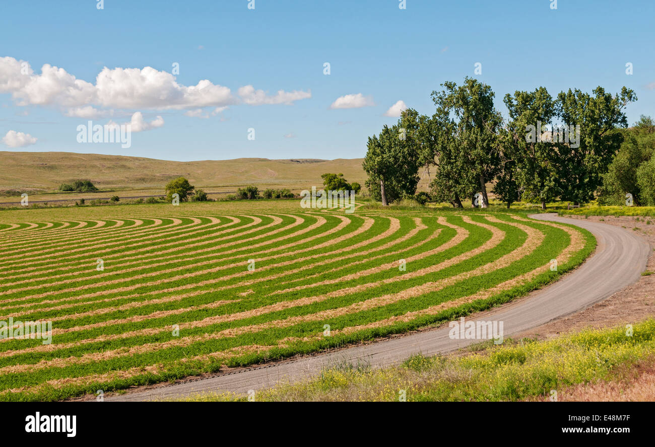Washington, la Palouse, ferme, la culture en contour labourer Photo Stock