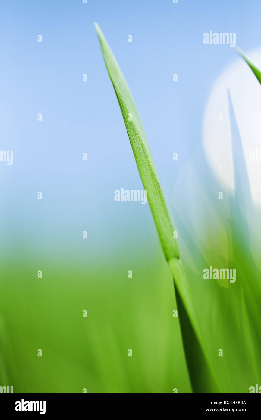 Lames de l'herbe verte Photo Stock