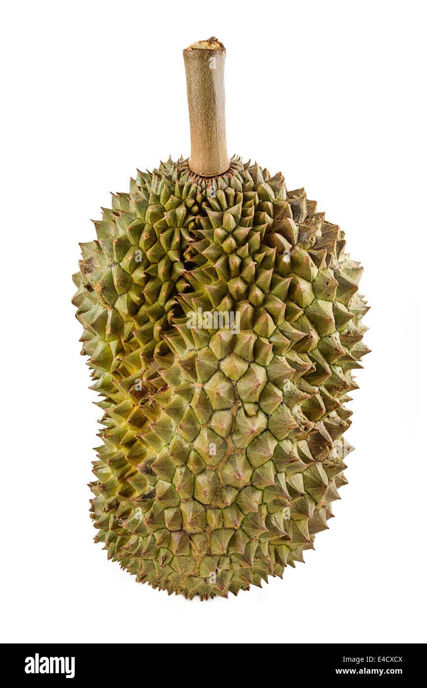 Durian, le roi des fruits de l'Asie du Sud est isolé sur fond blanc. Photo Stock