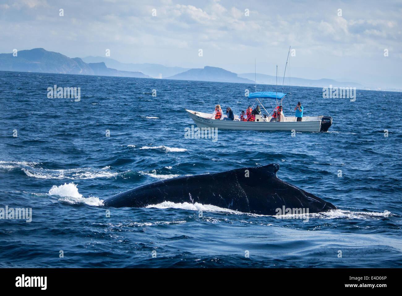 Les touristes photographier une baleine à bosse près de Mazatlán, Sinaloa, Mexique. Photo Stock