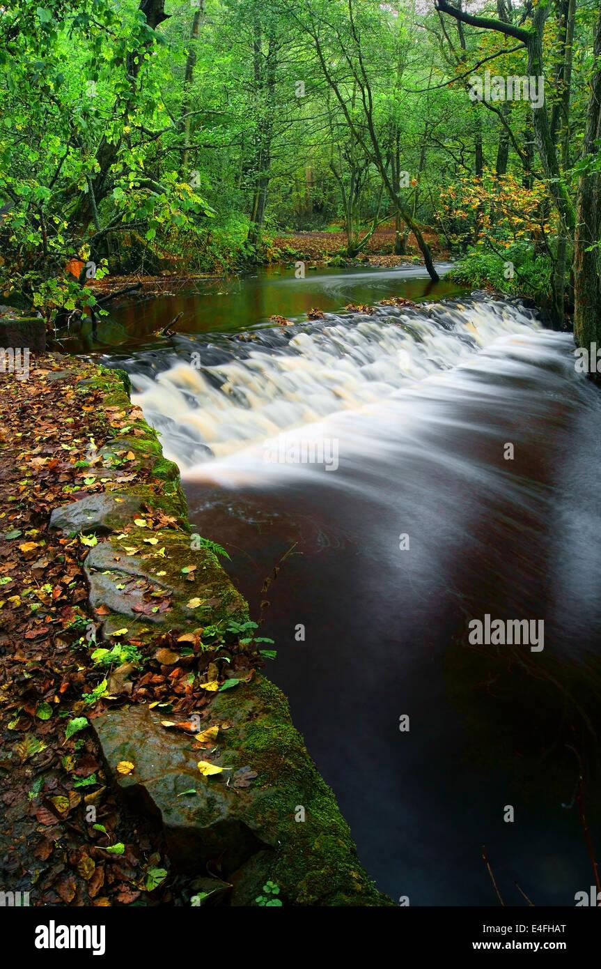 UK,South Yorkshire,Sheffield Rivelin Valley,Rivière,Tête,Rivelin Holme Weir Banque D'Images