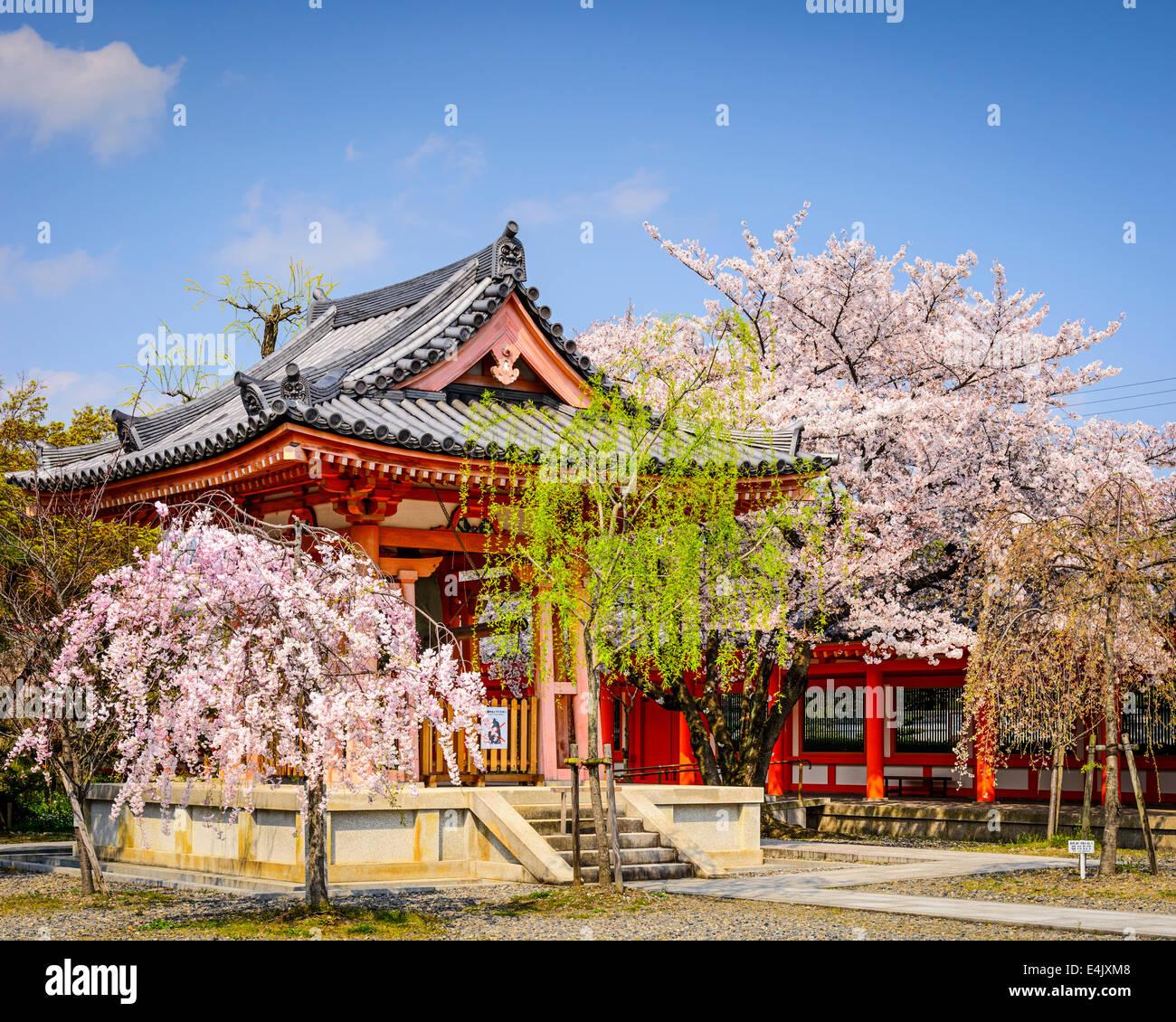 Jardins du temple Sanjusangen-do durant la saison du printemps à Kyoto, au Japon. Photo Stock