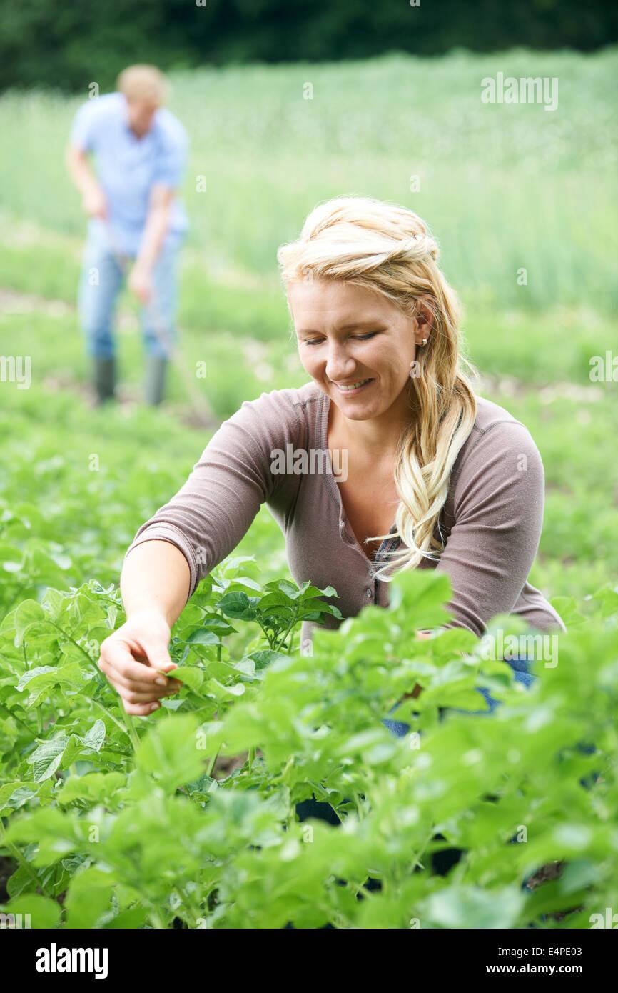 Couple sur terrain ferme biologique Banque D'Images