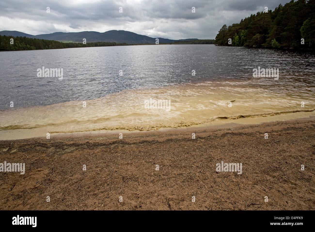 Couleur bleu-vert de la prolifération des algues phytoplanctoniques Abernethy National Nature Reserve Speyside Ecosse Inverness Loch Garten Banque D'Images