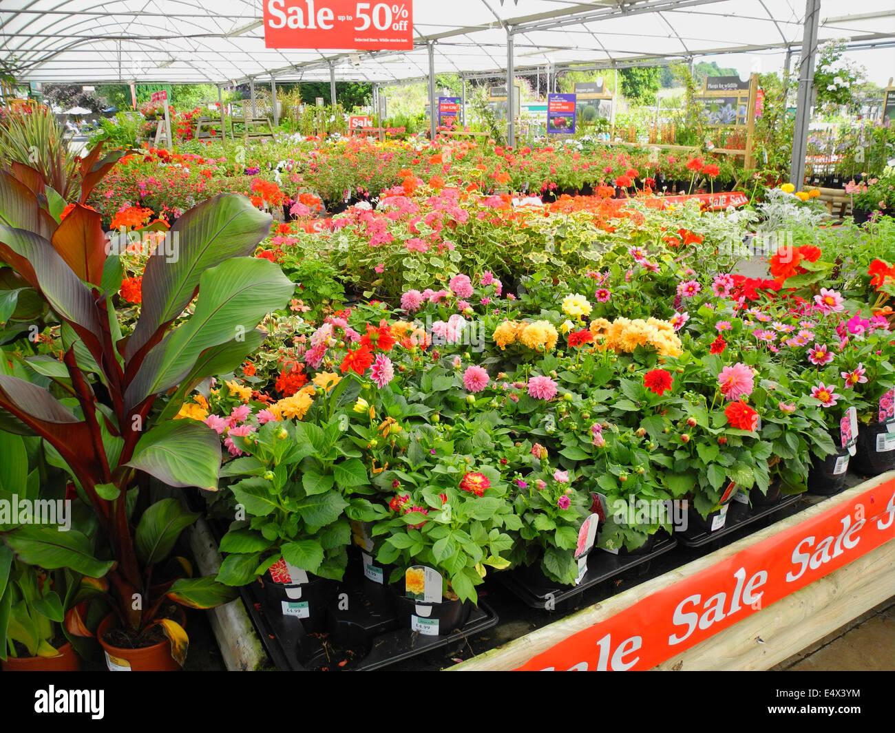 Centre jardin moitié prix vente de surplus excédentaire utilisation éditoriale plantes seulement Photo Stock