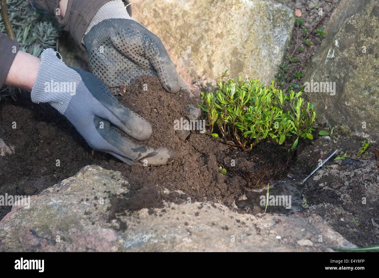 le jardinage, les semis, la culture, l'einpflanzen, pflanze