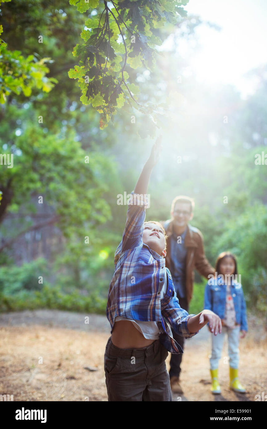 Boy catching glowing ball in forest Photo Stock