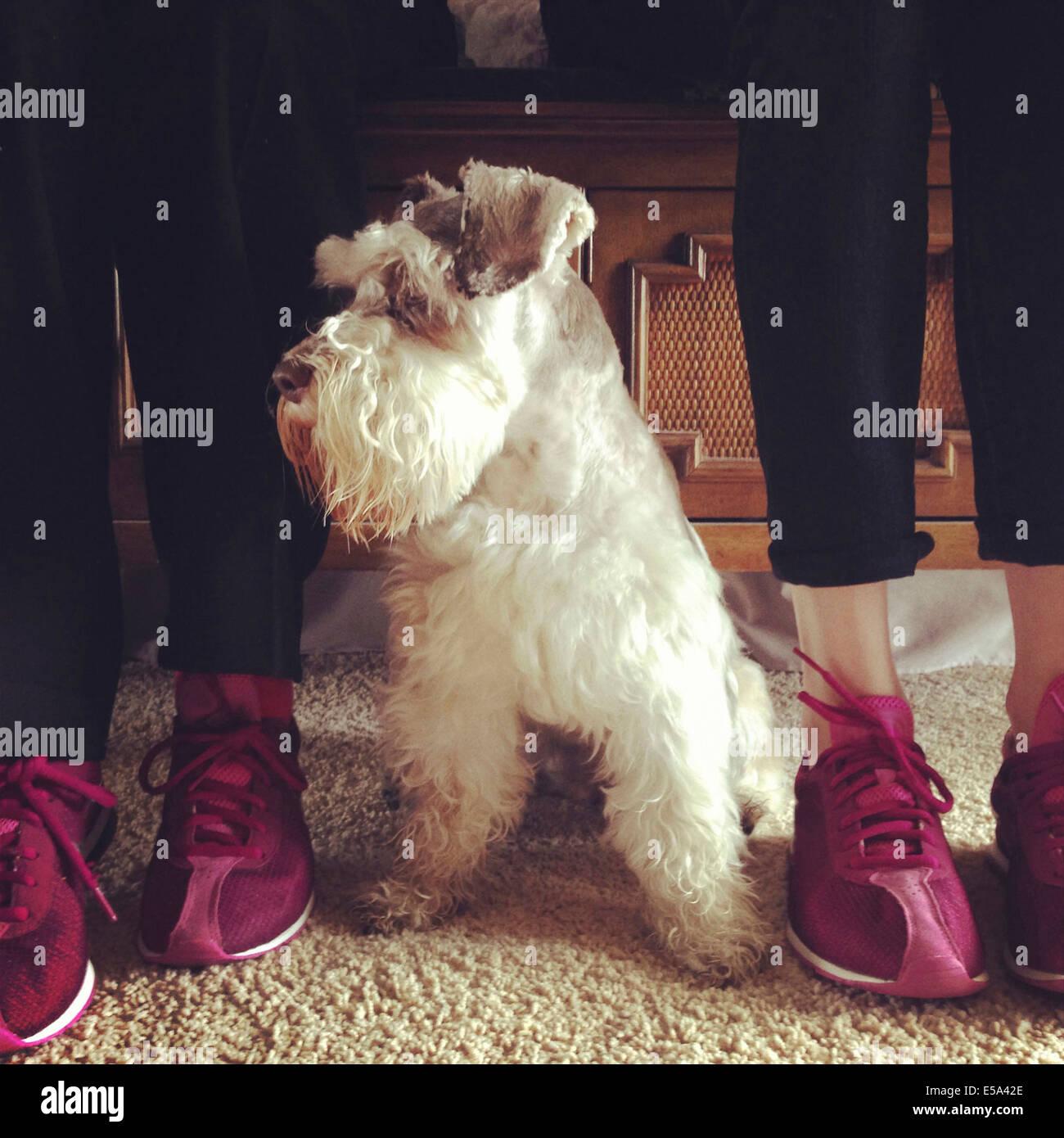 Grand-mère et petite-fille de chaussures avec chien Banque D'Images