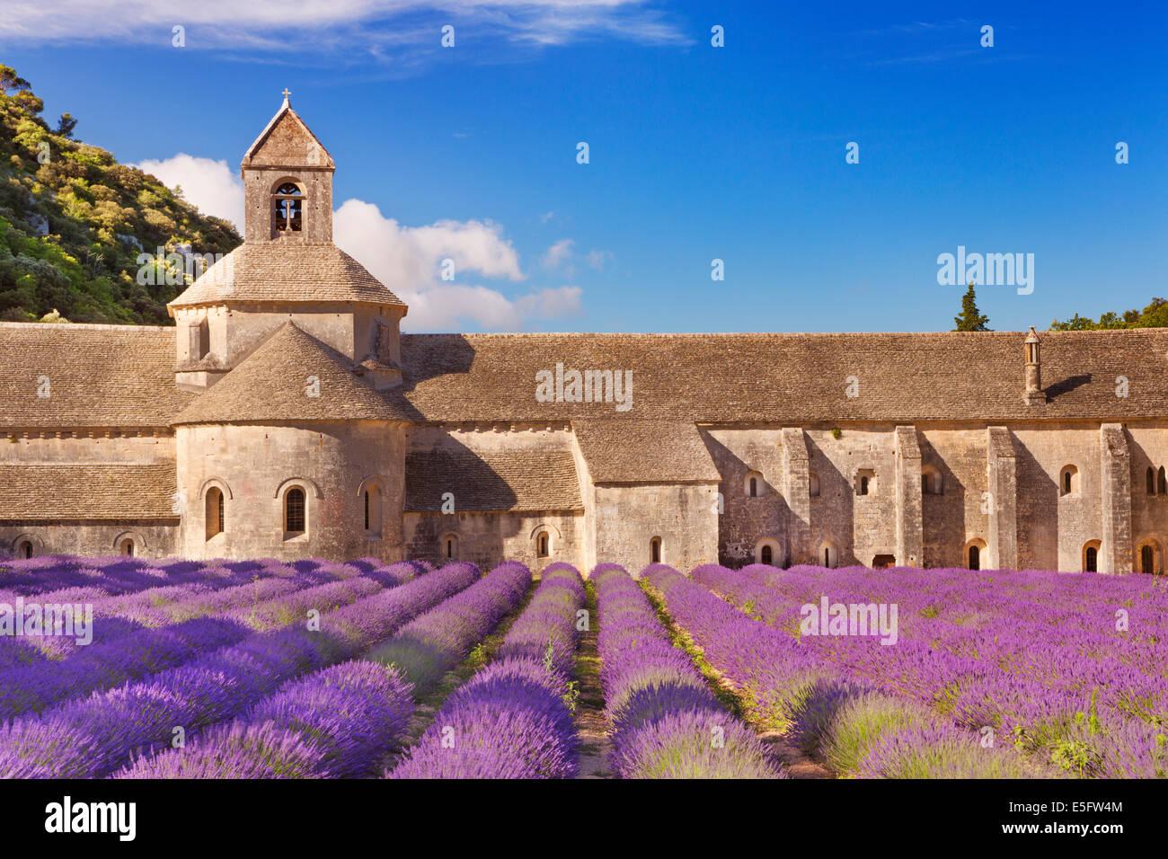 L'Abbaye de Sénanque en Provence, France de fleurs de lavande Photo Stock