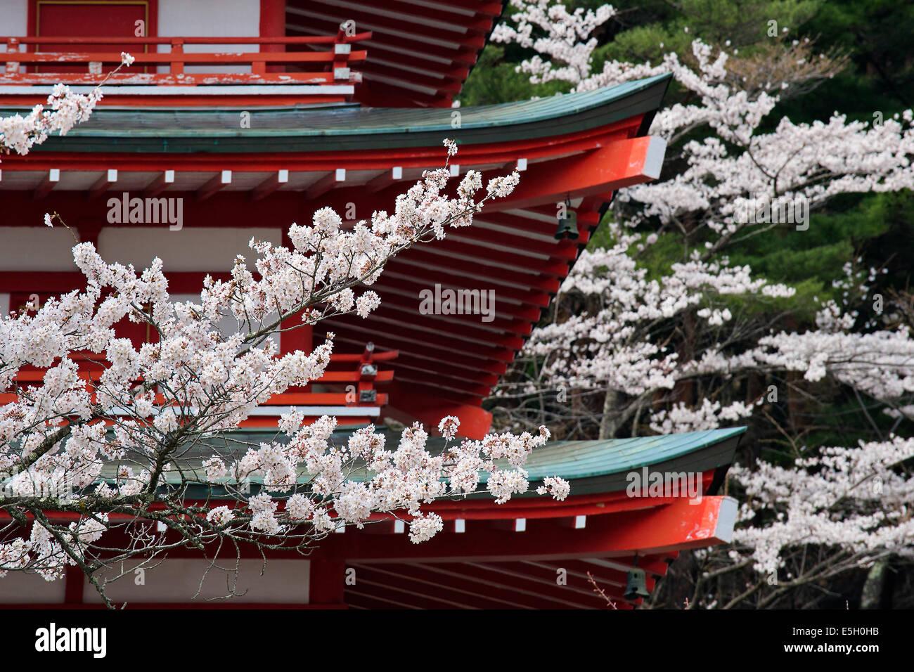 Les cerisiers à Chureito pagode, le Japon. Photo Stock