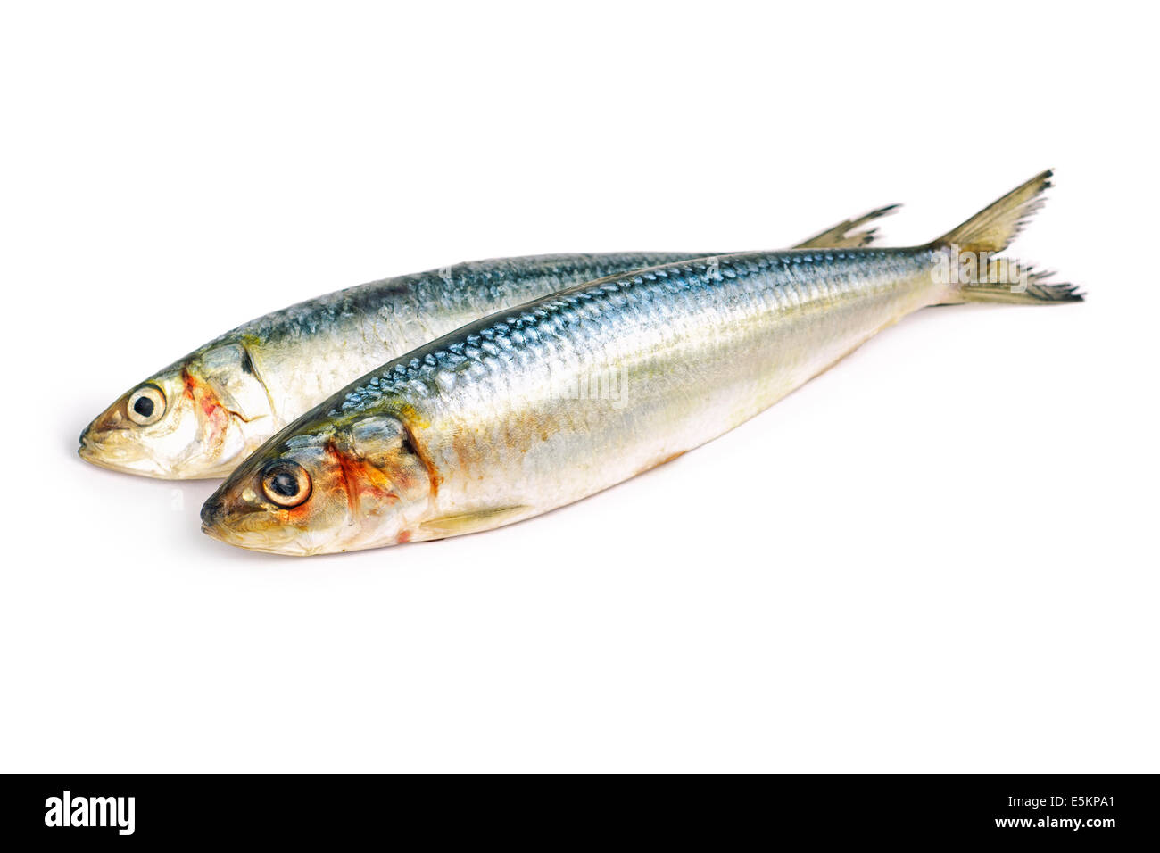 Les sardines, sardines, Sardines Deux Photo Stock