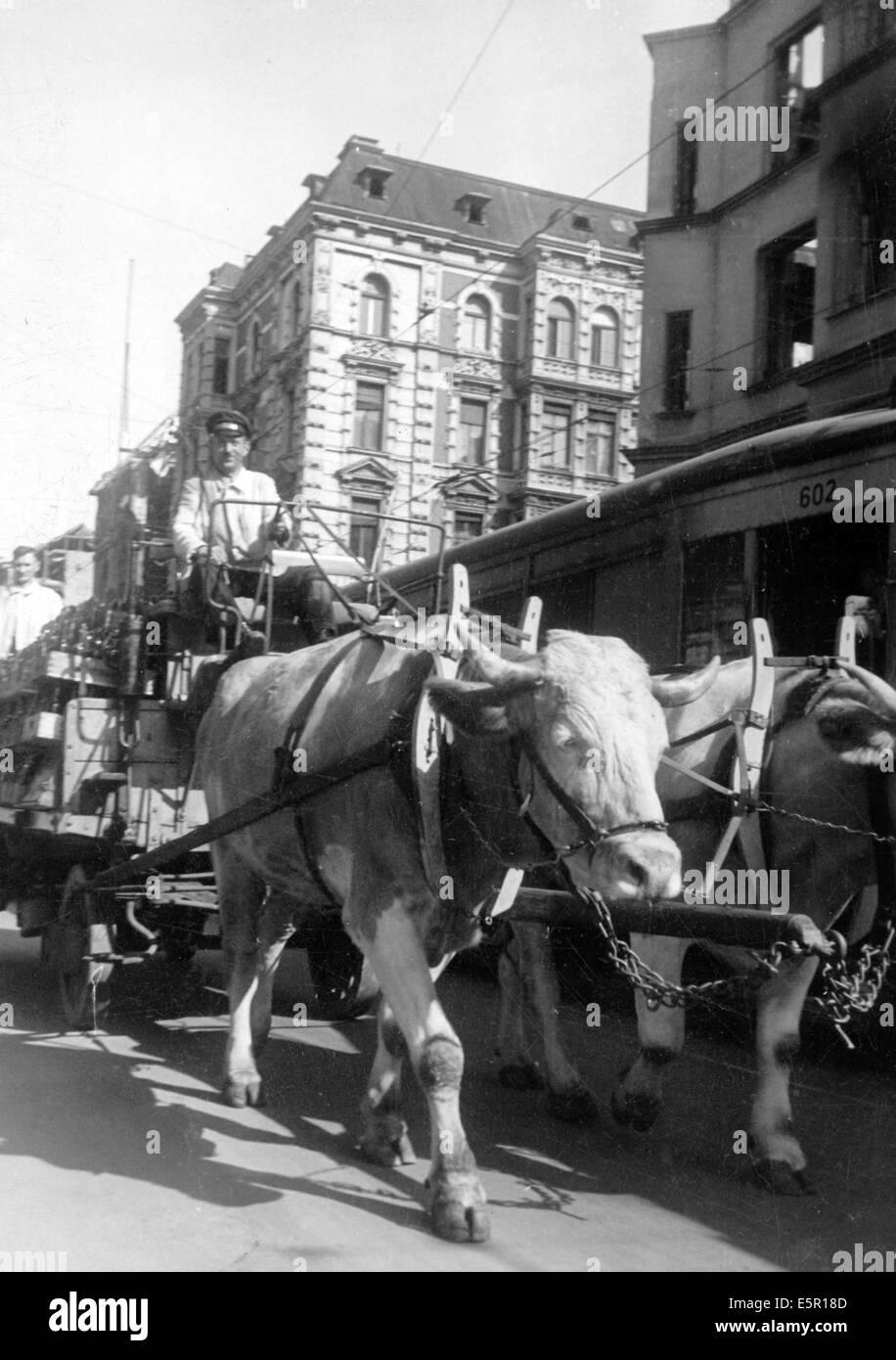 La photo d'un Nazi nouvelles rapport montre un boeufs tirant une charrette à Berlin, Allemagne, octobre Photo Stock