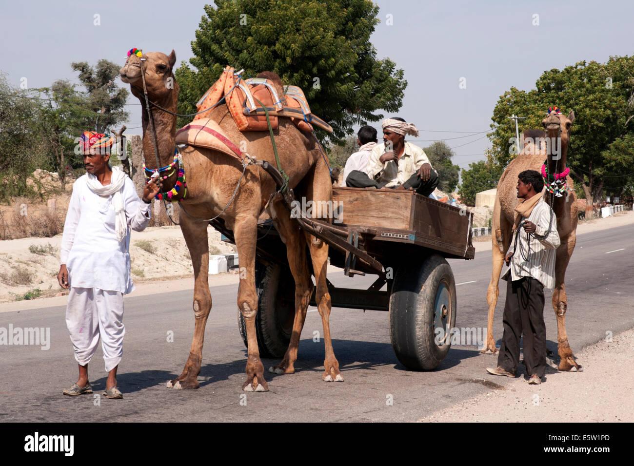 Transport typique avec un couple de chameaux et un wagon. Photo Stock