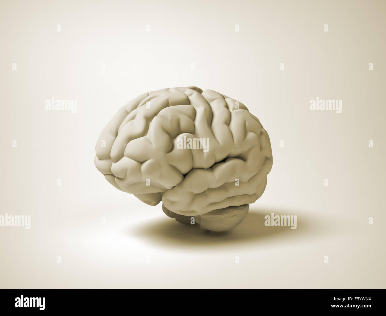 Cerveau humain conceptuel - illustration 3D render Photo Stock