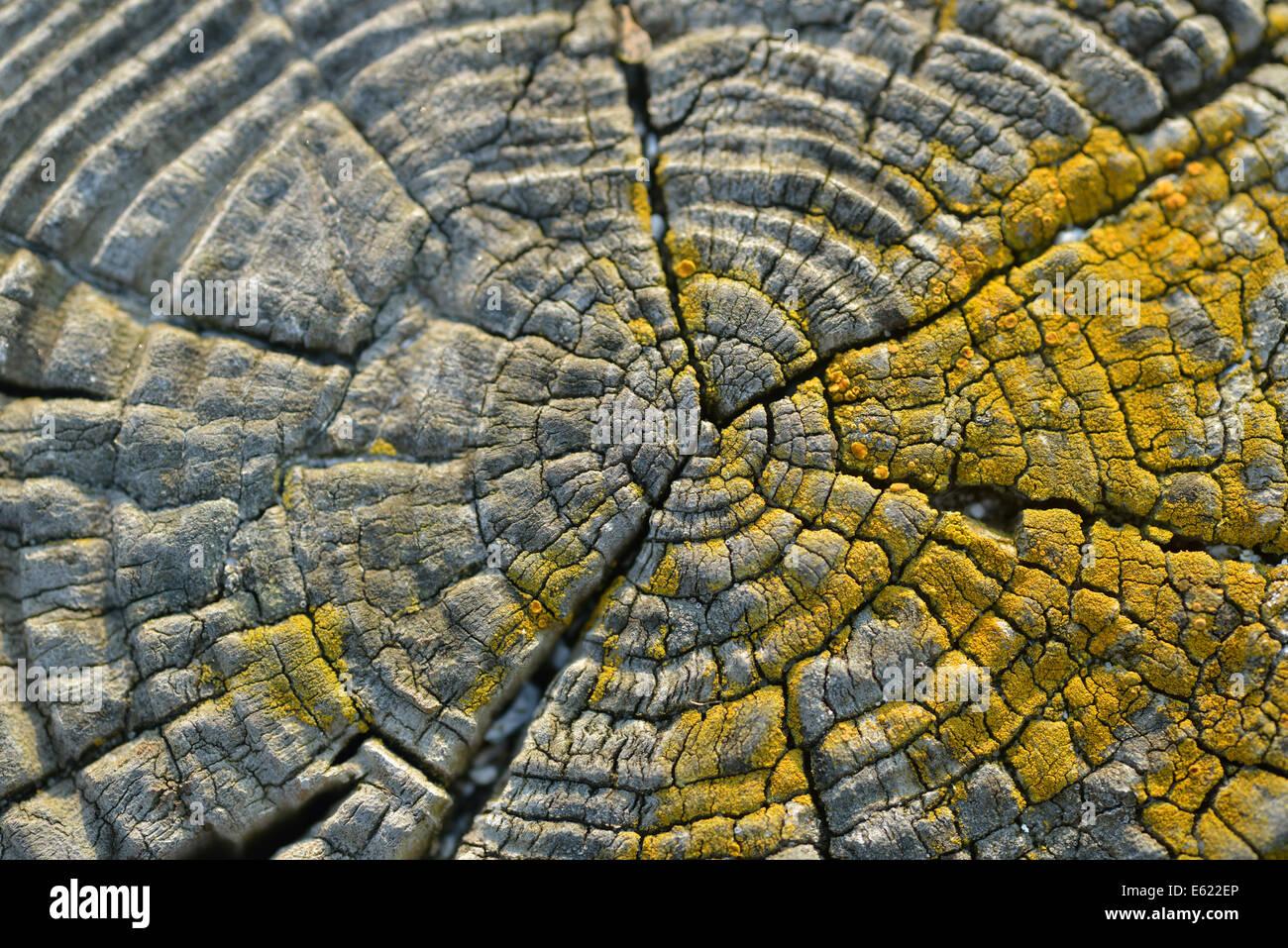 Clôture en bois close up Photo Stock