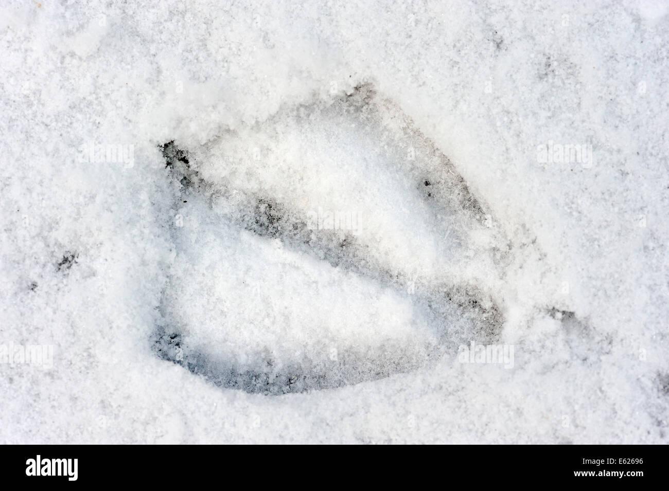 fussabdruck im schnee photos & fussabdruck im schnee images - alamy