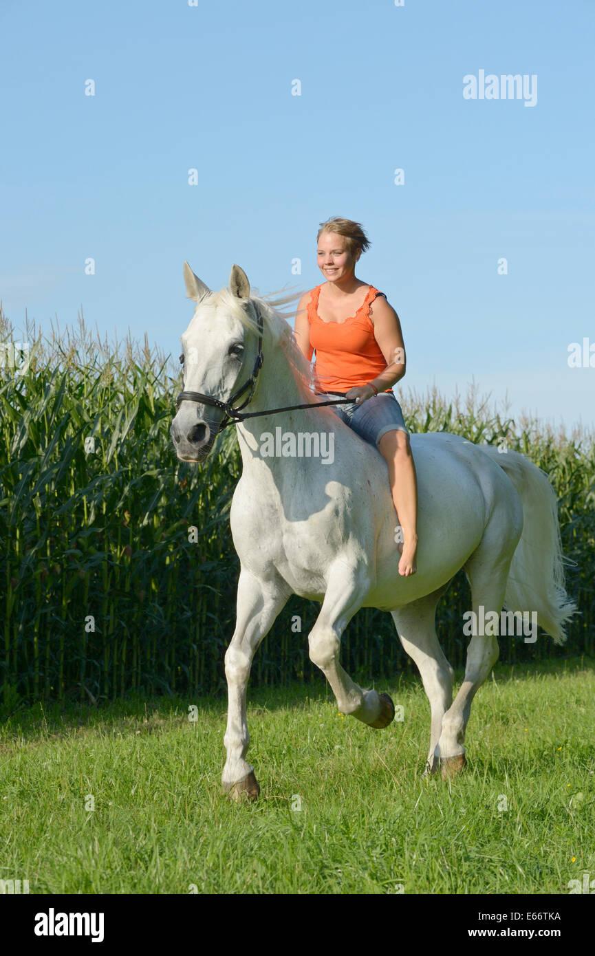 Jeune femme équitation bareback sur un 23-year-old horse bavarois le galop près d'un champ de blé Photo Stock