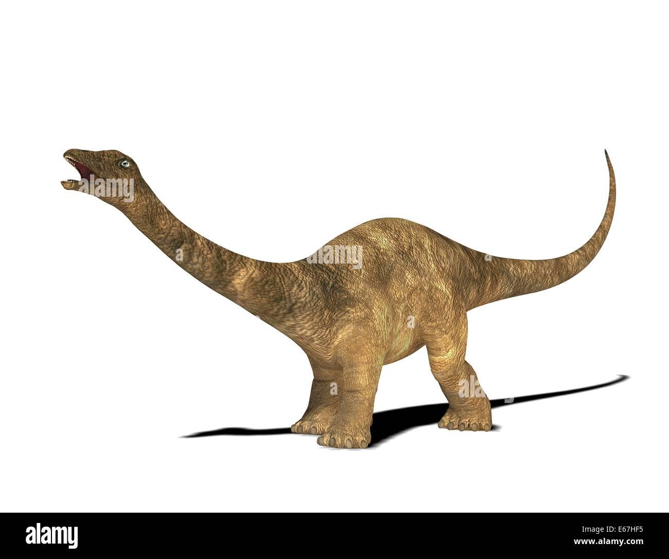 Diplodocus photos diplodocus images alamy - Dinosaure diplodocus ...