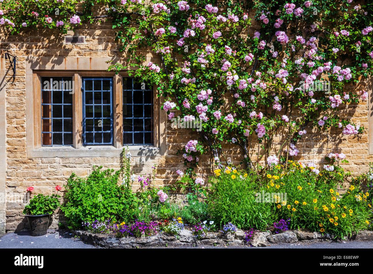 Cotswold cottage en pierre avec des fenêtres à meneaux, avant fenêtres à petits carreaux, rosiers Photo Stock
