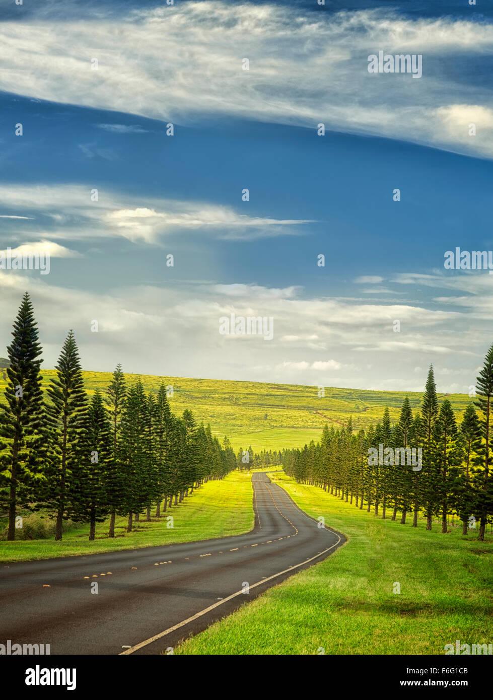 Route principale sur Lanai bordée de pins de l'Île Cook. Lanai, Hawaii Photo Stock