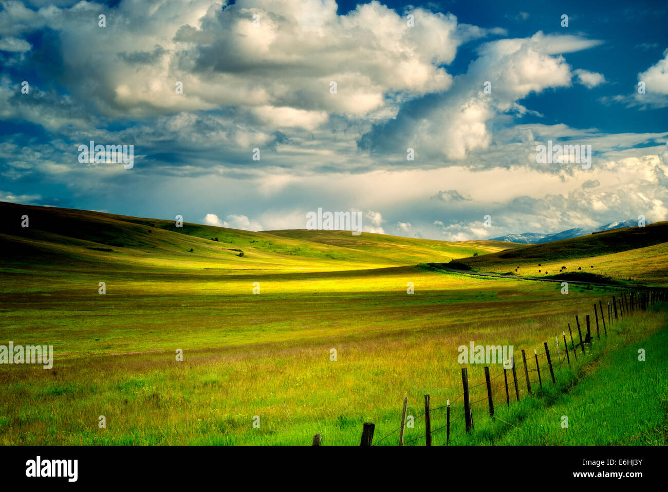Nuages de pâturage et clôture. Prairie Zumwalt, Oregon,vaches,vache Photo Stock