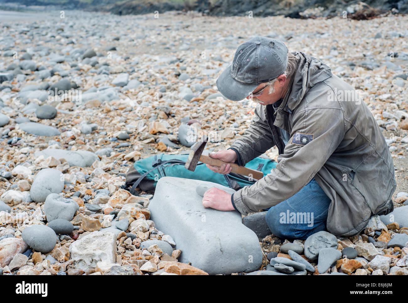 La chasse aux fossiles de l'homme sur la côte jurassique près de Lyme Regis dans le Dorset, Angleterre, Photo Stock