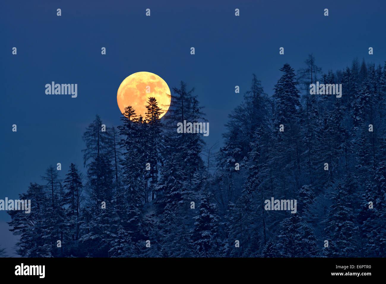 La pleine lune s'élève au-dessus d'une forêt d'hiver, Tyrol, Autriche Photo Stock
