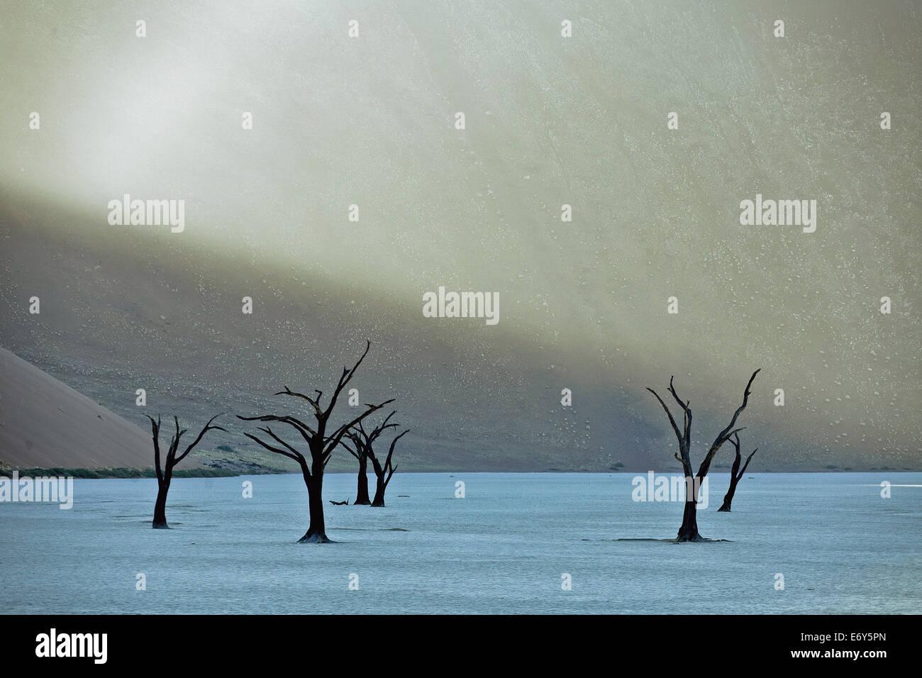 Camel thorn arbres morts dans Dead Vlei, Désert du Namib, Namibie, Afrique Photo Stock