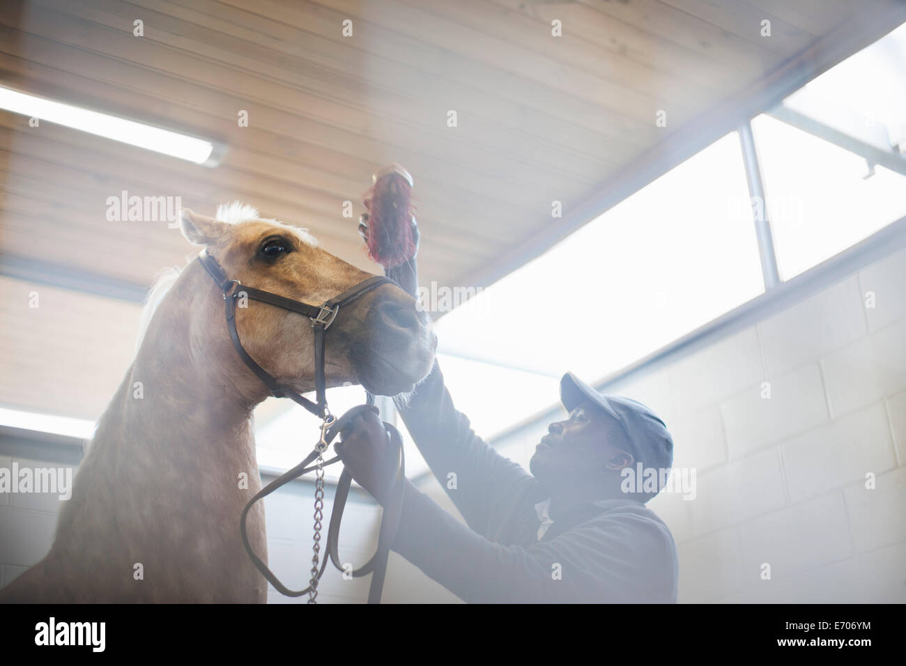 Low angle view of male stablehand cheval nerveux de toilettage Photo Stock