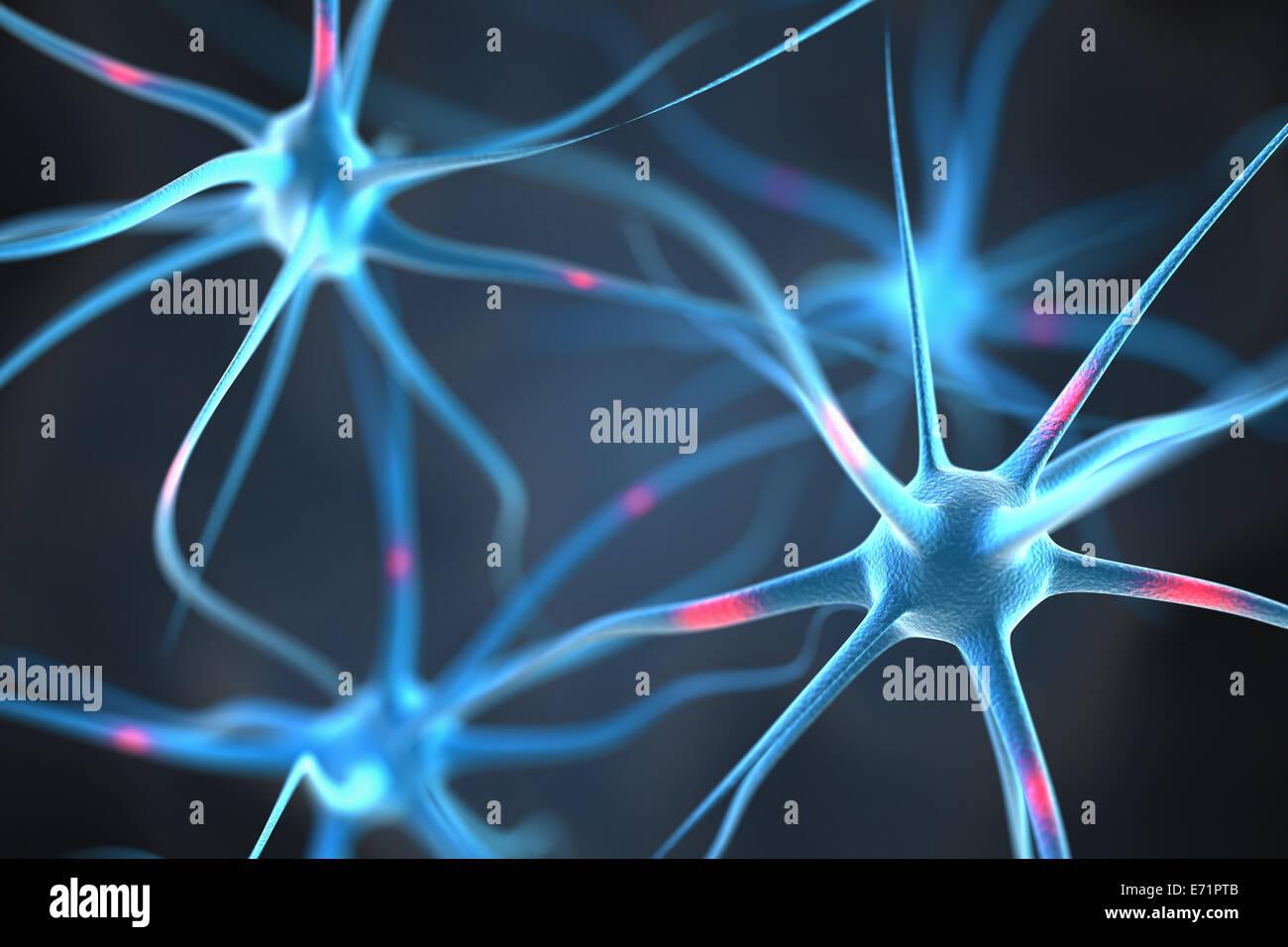Les neurones dans le cerveau Photo Stock
