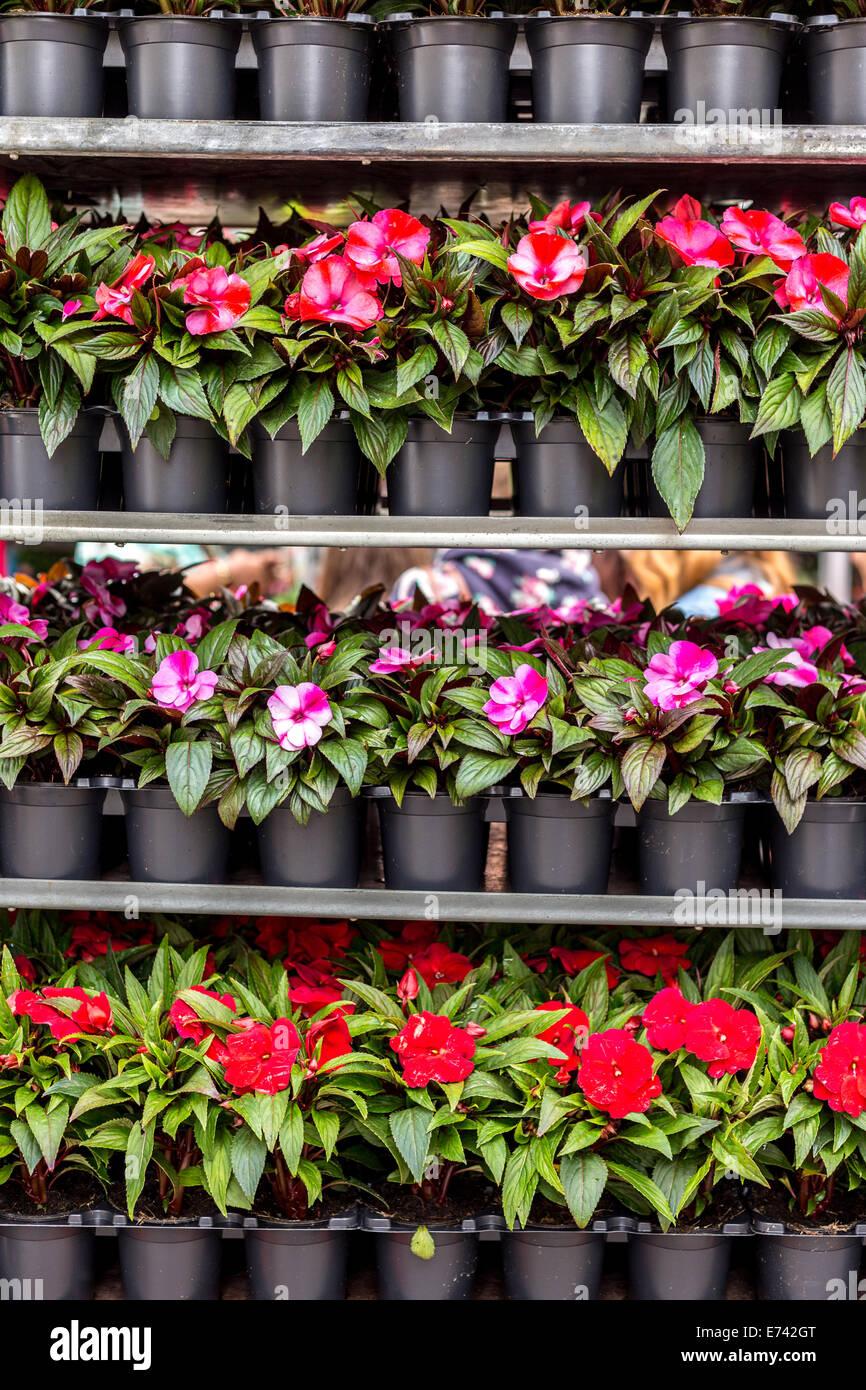 Plantes en pots noir à vendre à London's Columbia Road Market Photo Stock