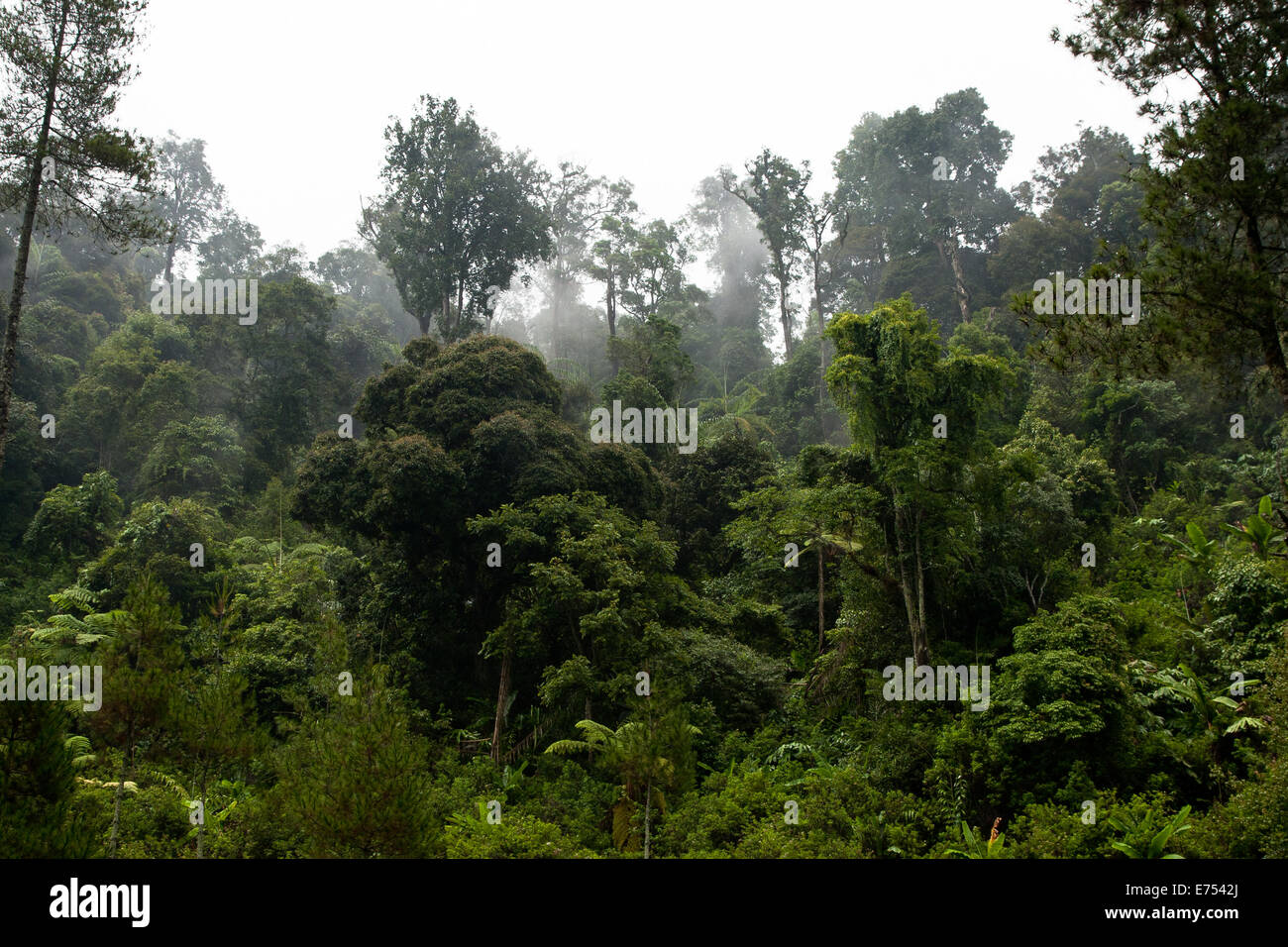 Dans la jungle de l'île de Java en Indonésie. Photo Stock