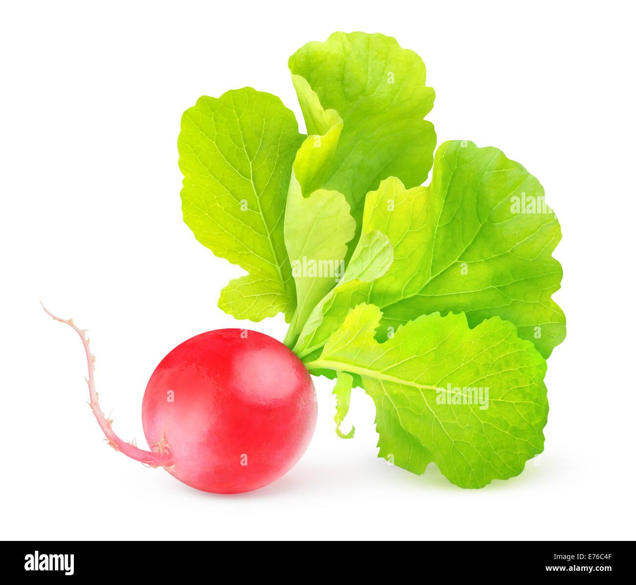Radis rouge sur fond blanc Photo Stock