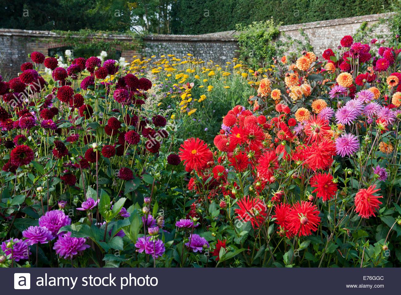Jardin de fleurs coupées mélangées Dahlias fleurs fleurs fleurs ...