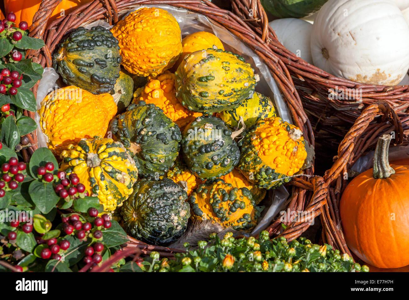 Citrouilles, Courges, plantes décoratives, afficher Photo Stock