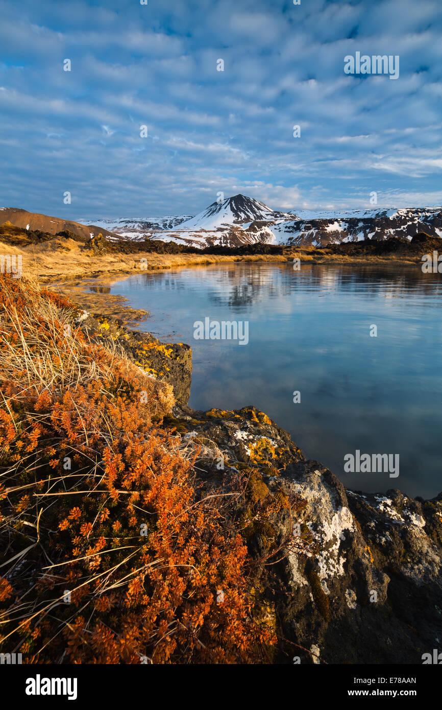 Le lichen sur les rochers de l'Budhraun des champs de lave, avec au-delà de Maelifell, Budir, Péninsule Photo Stock