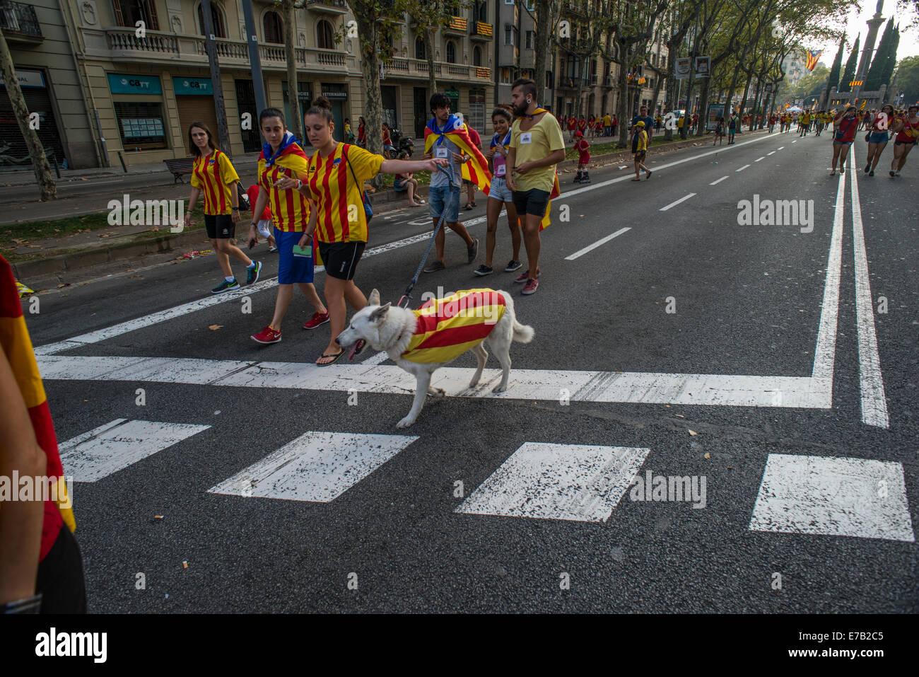 La façon catalane Diada ou Journée nationale de la Catalogne Dog Photo Stock