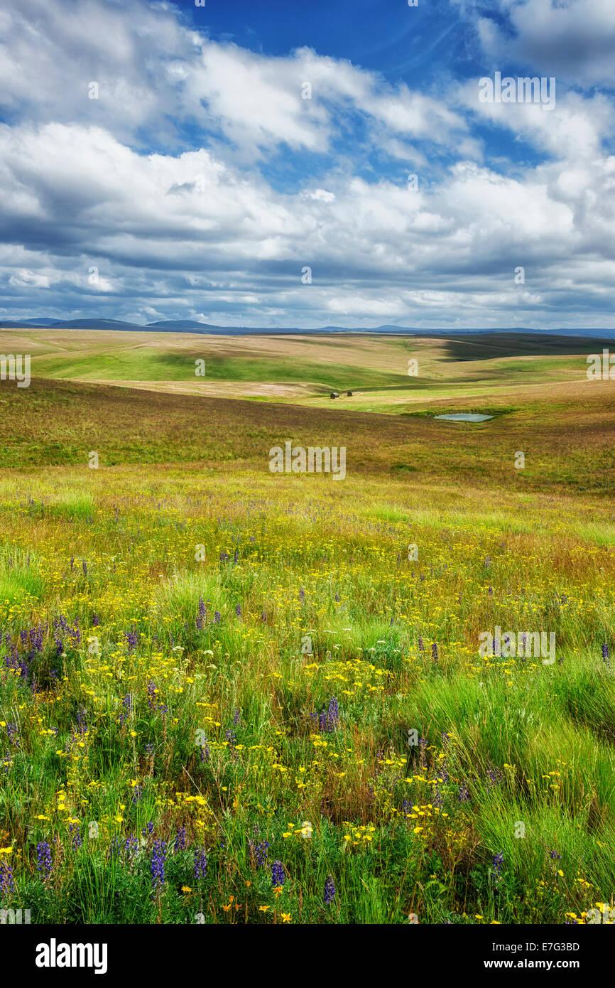 Pause soleil sur les collines de NW Oregon's Prairie Zumwalt de Wallowa Comté. Photo Stock