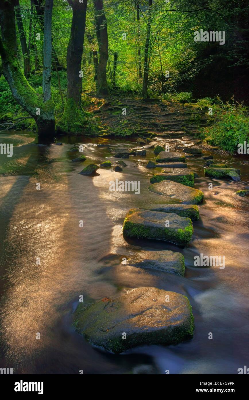 UK,South Yorkshire,Sheffield Rivelin,chutes et des Tremplins Banque D'Images