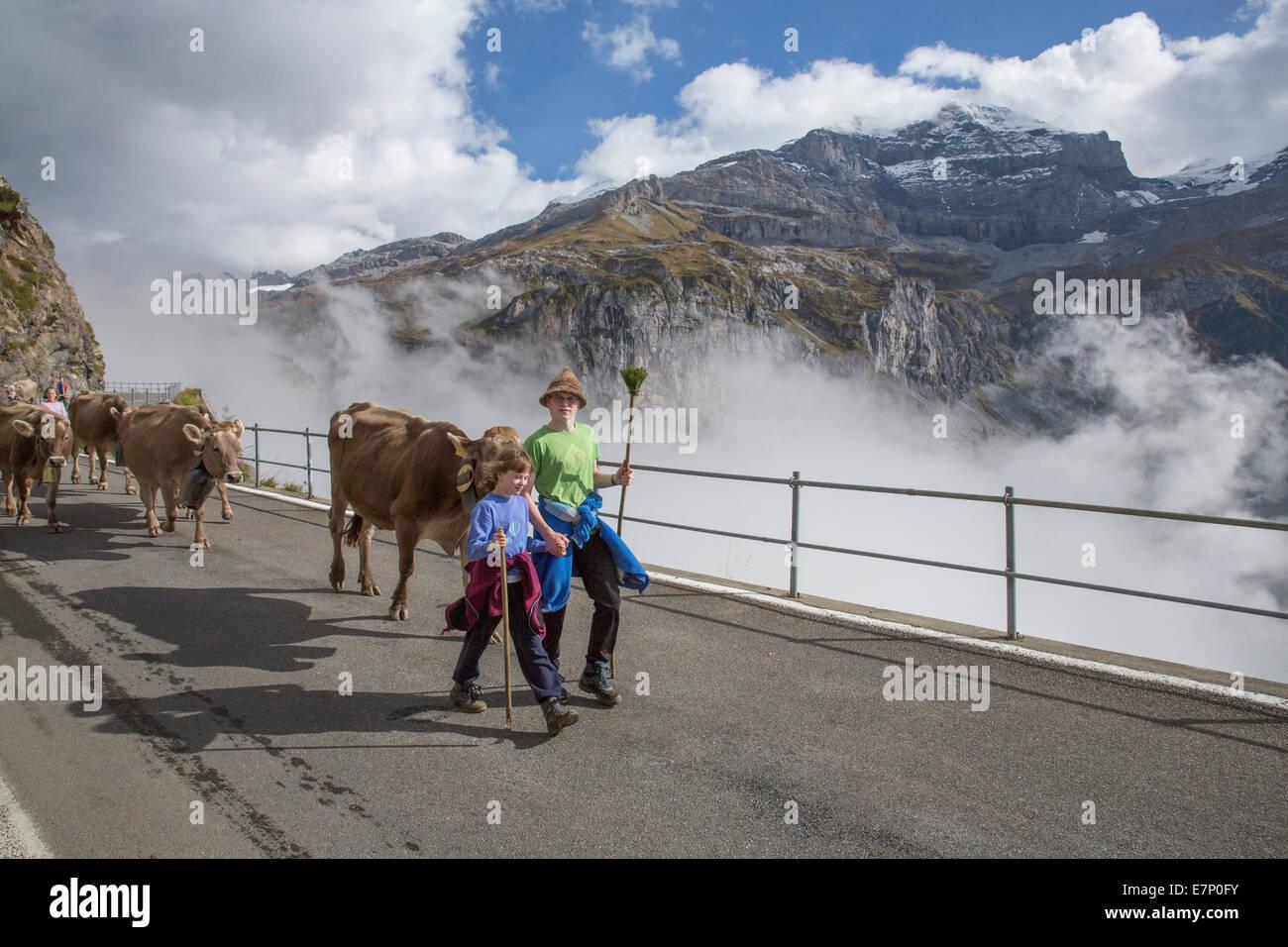 Klausenpass, UR, Alpes, nuages, nuage, montagne, montagnes, automne, vache, vaches, de l'agriculture, la Suisse, Photo Stock