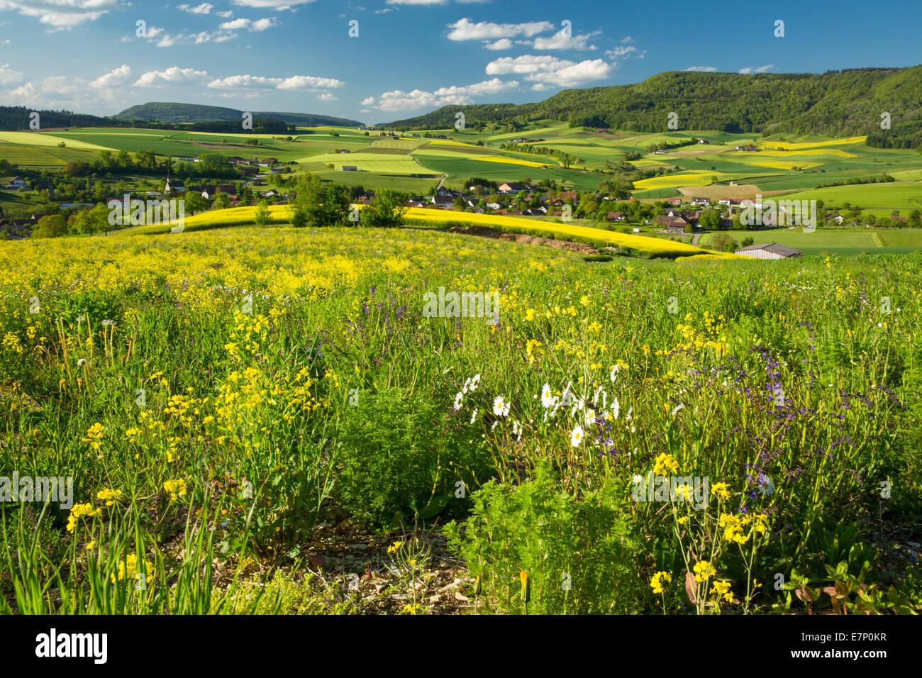 Randen, rugueux, Beggingen, printemps, canton, SH, Schaffhouse, fleur, fleurs, paysage, paysage, l'agriculture, Photo Stock