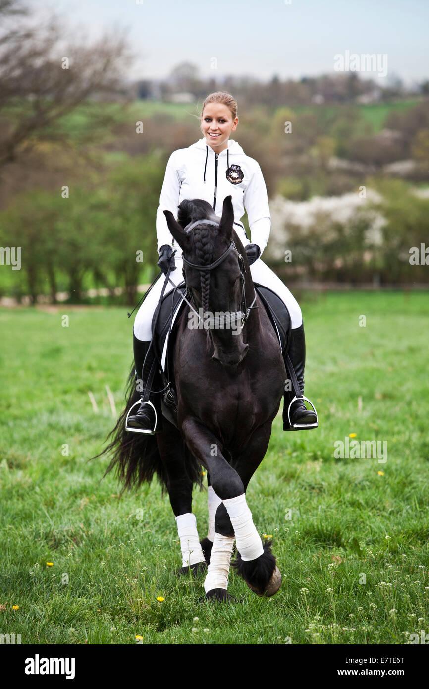 Cheval frison frisons ou étalon, avec une femelle cavalier à cheval sur un pré, dressage classique, Photo Stock