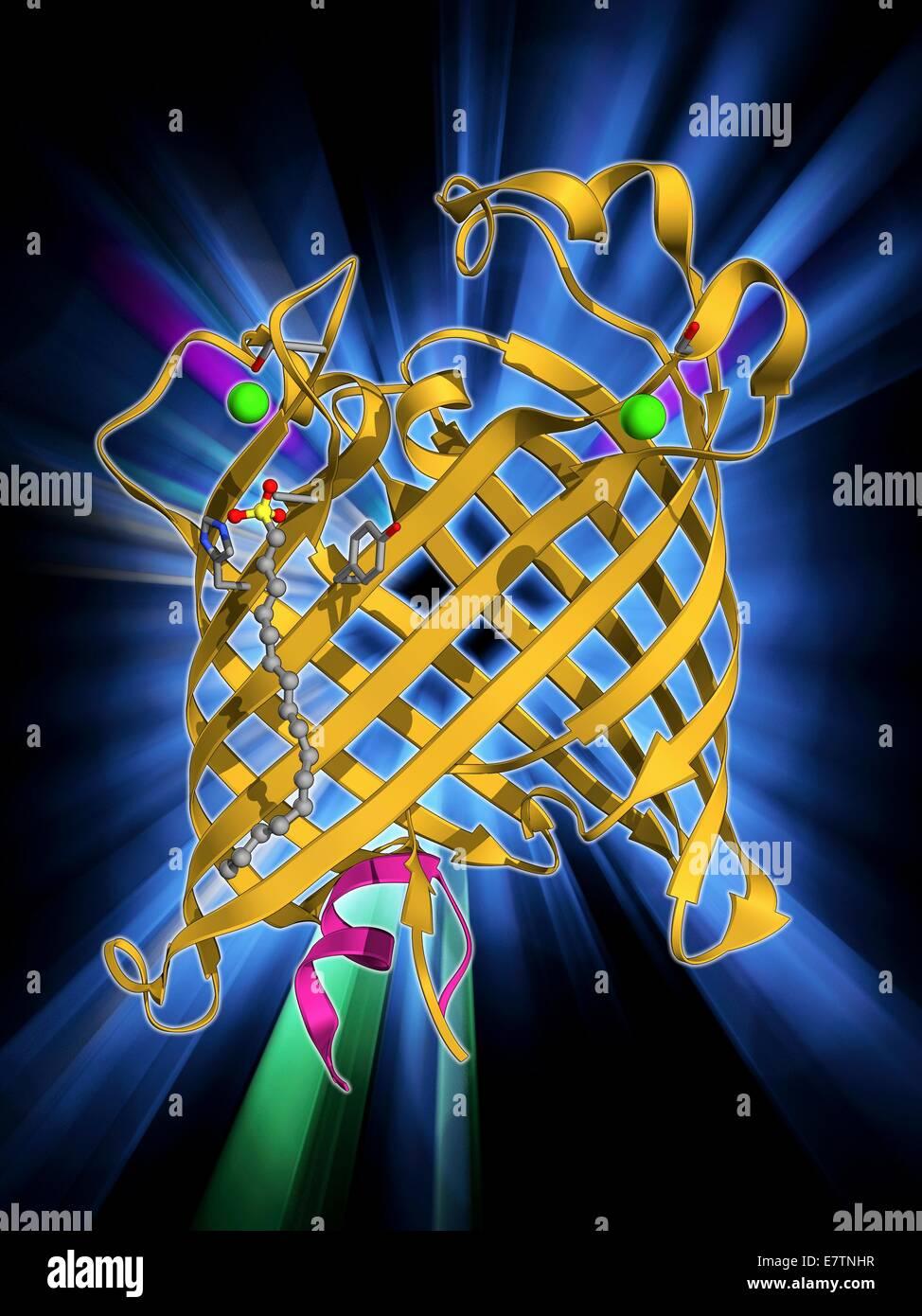La membrane externe à la phospholipase A. Le modèle moléculaire de la protéine intégrale de membrane, la membrane externe de la phospholipase d'une bactérie Escherichia coli. Les phospholipases sont des enzymes qui catalysent la répartition des phospholipides dans les acides gras. Dans E. coli phos Banque D'Images